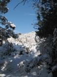 winter beauty - whitewater