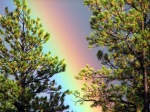 BP Rainbow Pines_4481